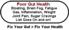amplifei gut health